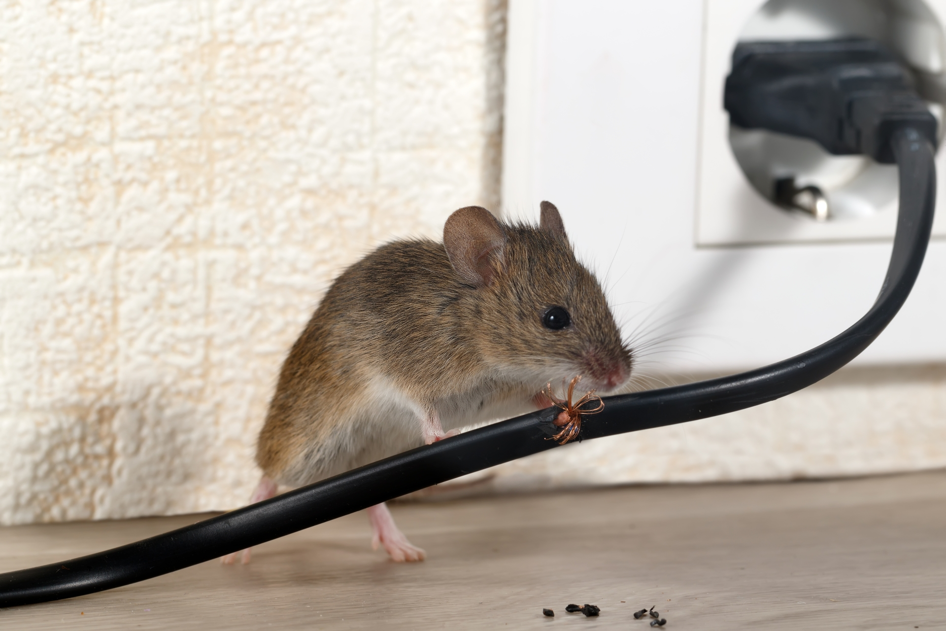Mice Infestation, Pest Control in Shoreditch, E2. Call Now 020 8166 9746
